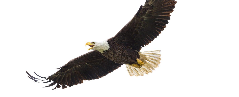 Eagle Institute