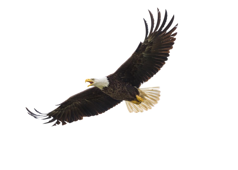 Eagles Restaurant Menu