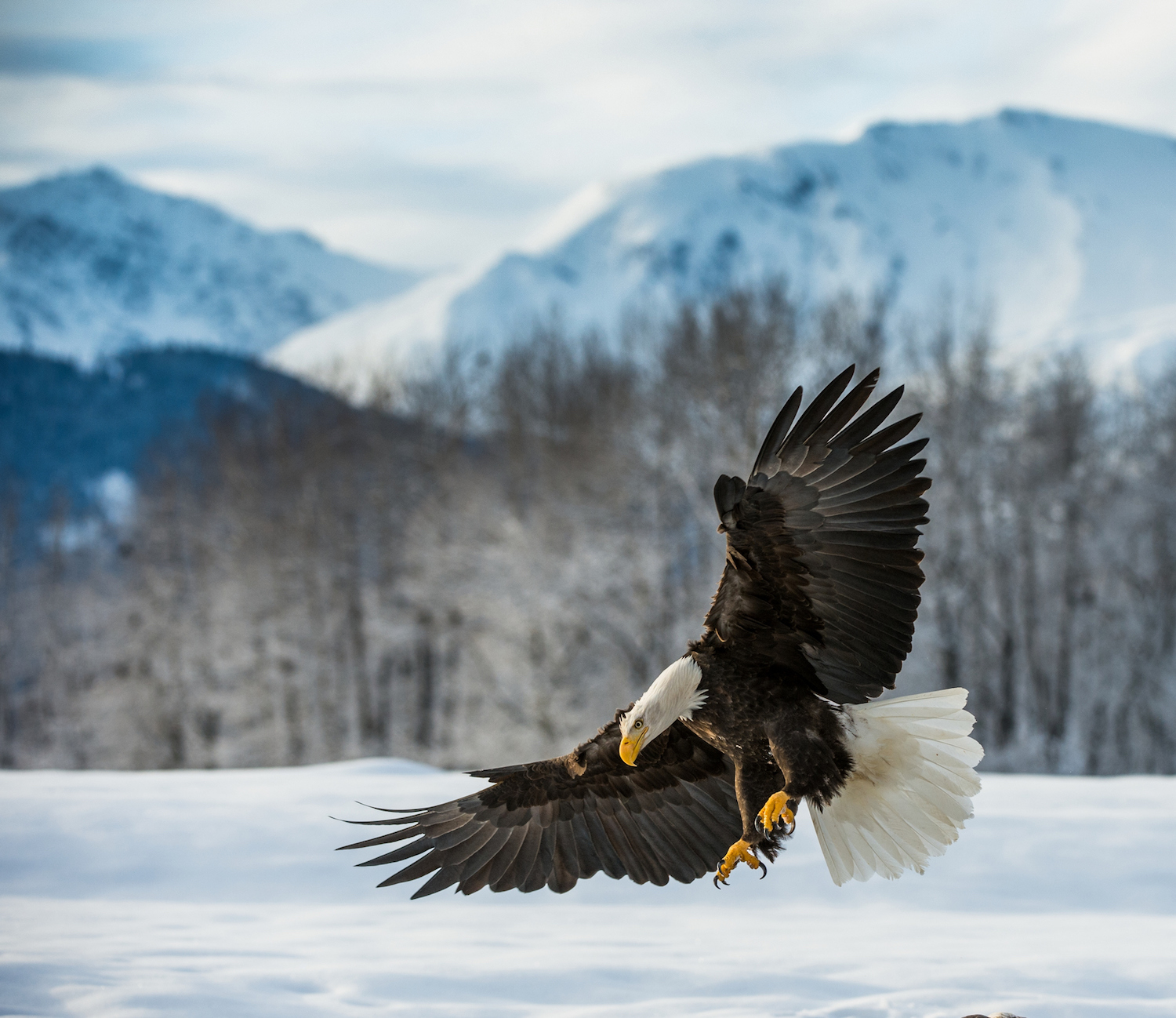Everything You Need To Know About Where To See Bald Eagles
